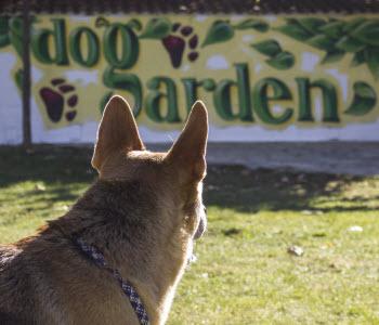 Curso de adiestramiento de cachorros Dogarden