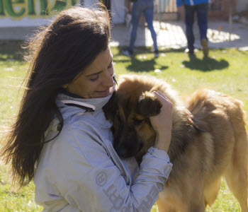 Curso de cachorros en Zaragoza