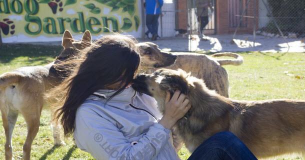 Guardería para perros en Zaragoza