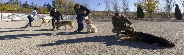 Adiestrar perro en Zaragoza Dogarden