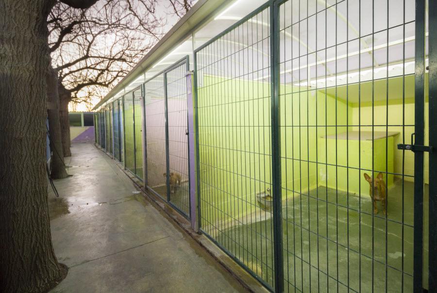 Instalaciones Dogarden Zaragoza