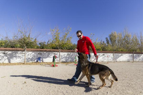Cómo enseñar a un perro a obedecer