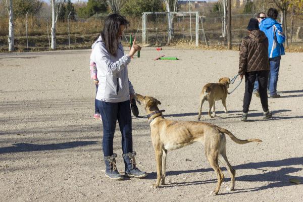 Adiestramiento para socializar perros