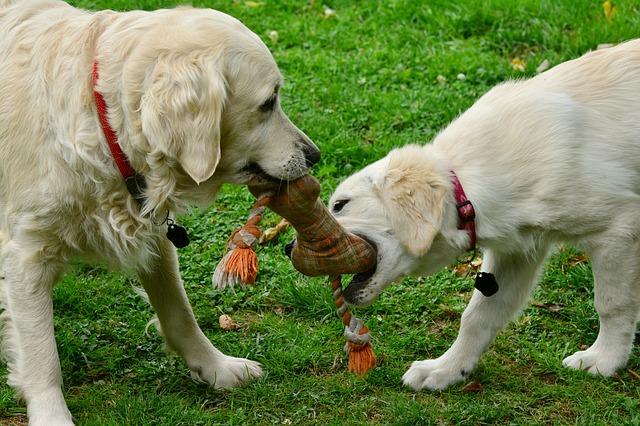 Cómo socializar a un perro