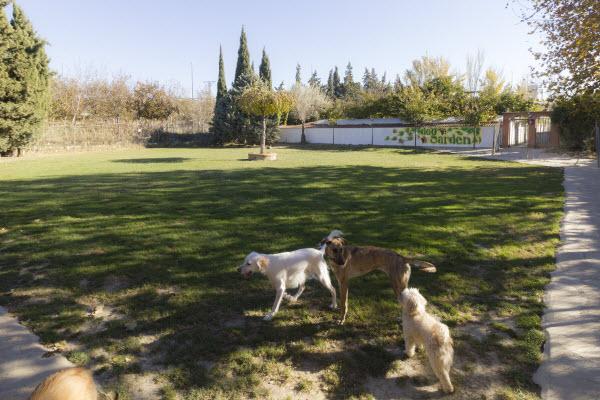 Guarderia para perros