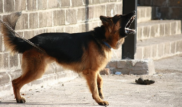 Mi perro gruñe