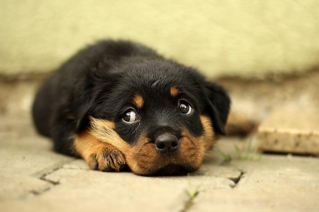 Dejar al perro solo en casa