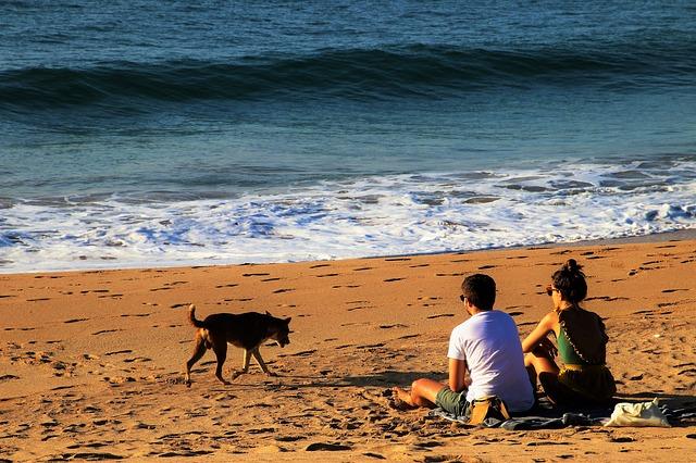 Perro tras las vacaciones