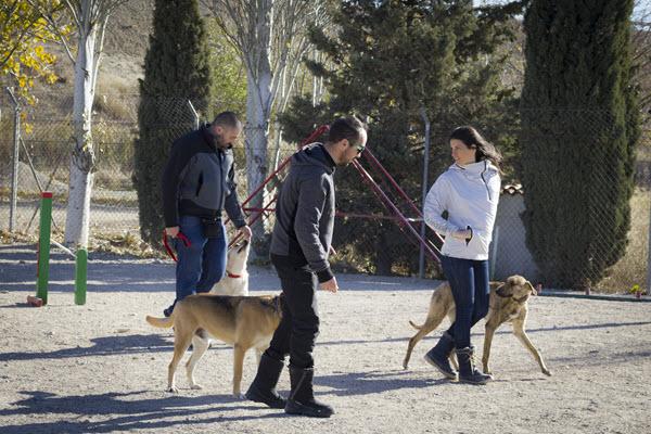 Problemas al entrenar un perro