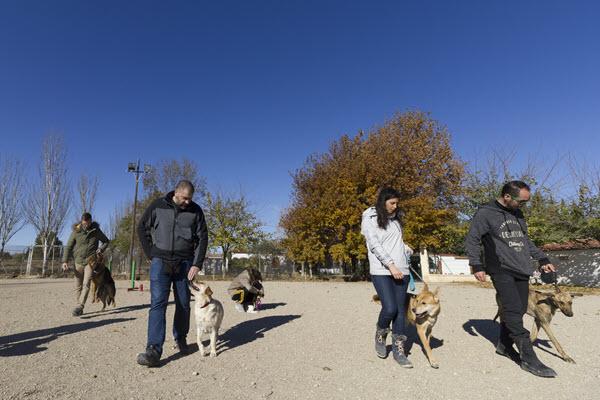 Elegir escuela de adiestramiento canino