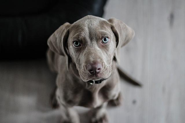 Personalidad de un perro