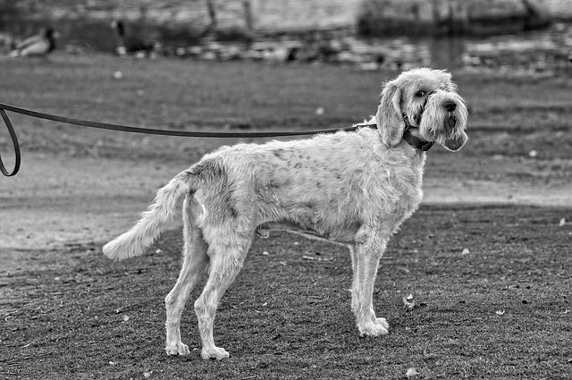 Elegir la correa y collar adecuado para tu perro