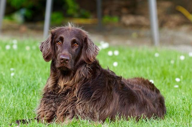 Trucos para el adiestramiento canino | Dogarden Zaragoza