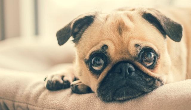 Cómo adiestrar un perro miedoso