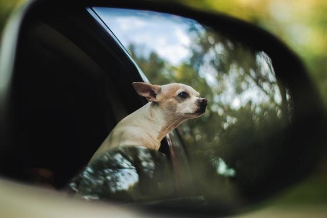 Consejos para viajar con perros nerviosos