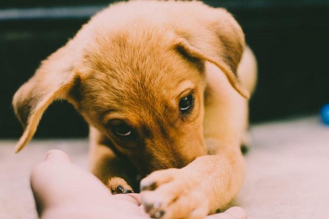 Adiestramiento para perros miedosos en Zaragoza