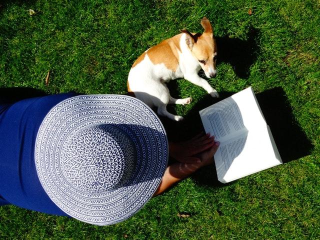 Cómo afecta el verano a mi perro