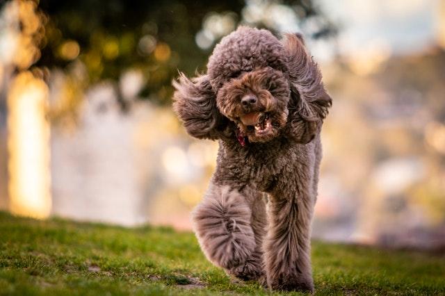 Cómo puedo quitarle el nerviosismo a mi perro