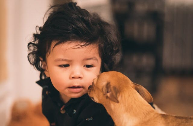 Qué hacer si el perro muerde a un niño