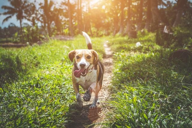 Como hacer para que el perro no ladre