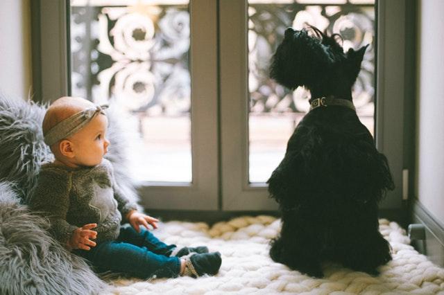 Perros y niños, ¿cómo educarlos?