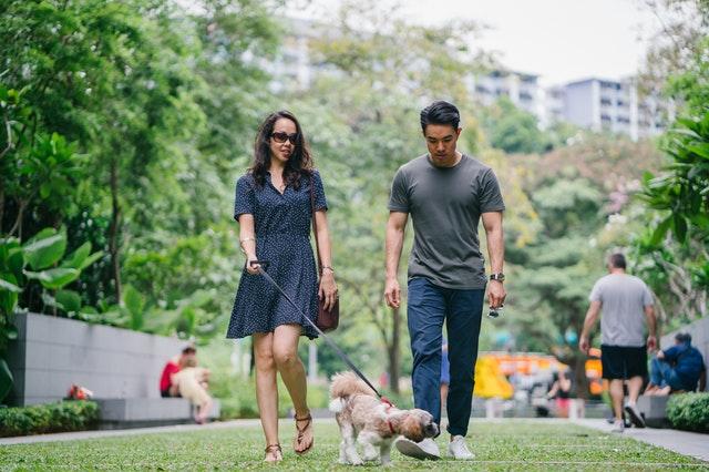 Consejos para pasear al perro