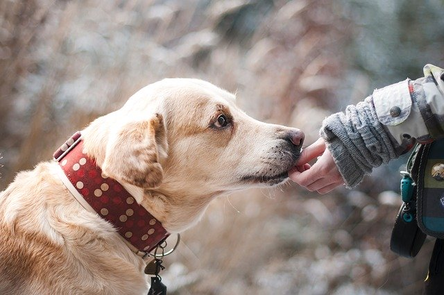 Educar perro adulto 1