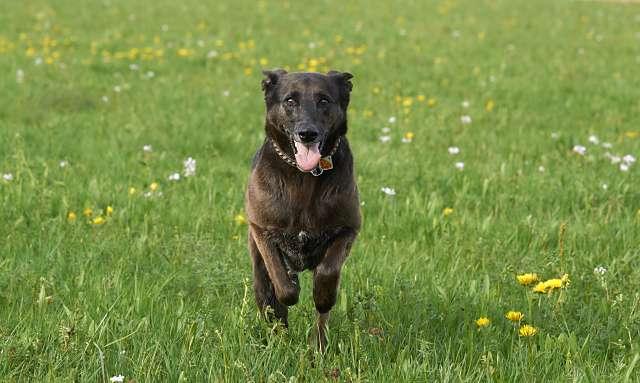 Hacer que mi perro venga si lo llamo (4)