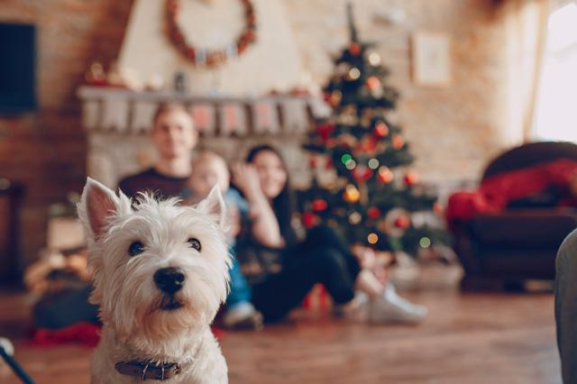 navidad-con-mascotas-(1)