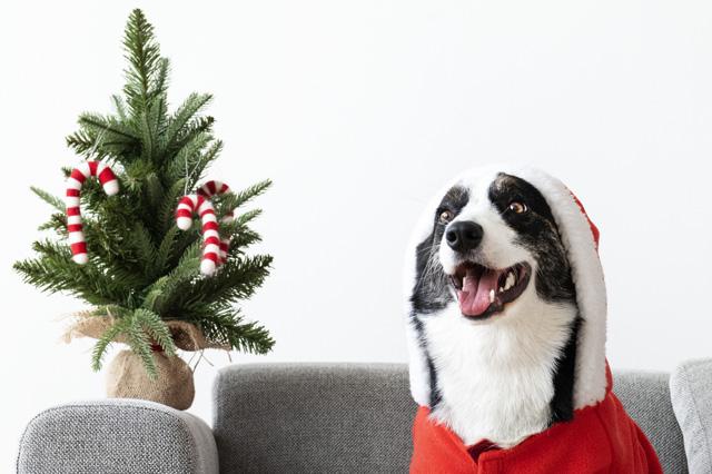 navidad-con-mascotas-(3)