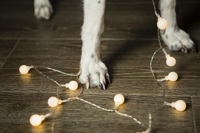 navidad-con-mascotas-(4)