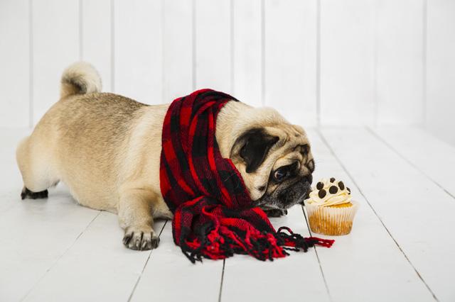 navidad-con-mascotas-(5)
