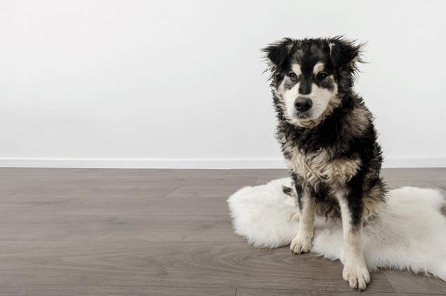 perro-no-ladre-2