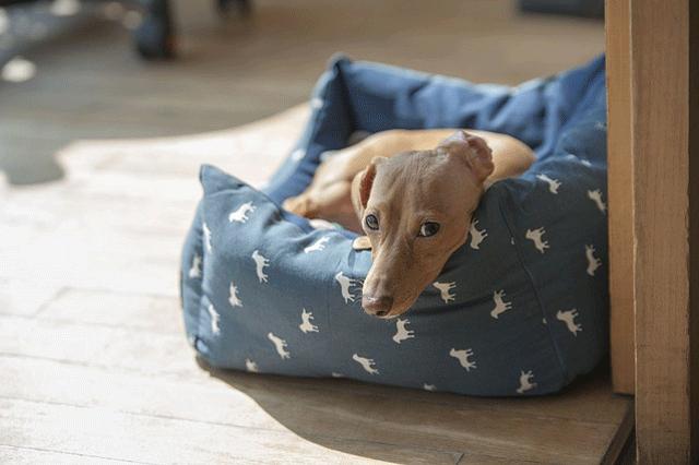 perro-no-ladre-3