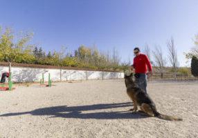 VII Concurso canino de Dogarden