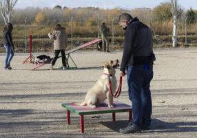 Errores en el adiestramiento canino