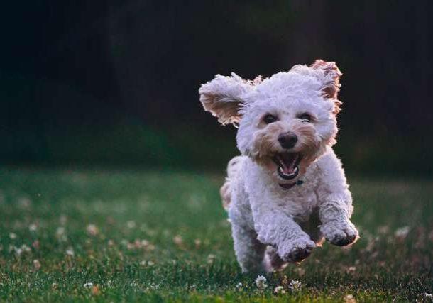 Hacer que mi perro venga si lo llamo (2)