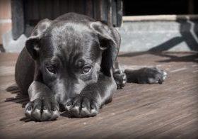 Mi perro no me hace caso (2)